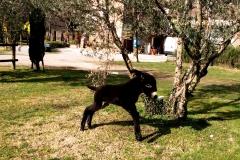 asinello4-agriturismo-la-colombara-gaium